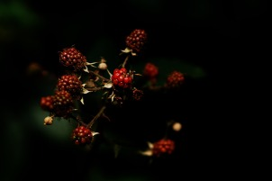 fruits-of-the-forest-1556704_1920